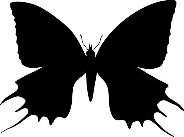 Бабочка с необычными крыльями