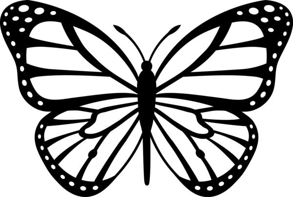 Бабочка с тонкими крылышками