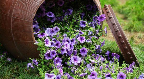 Бочку тоже можно приспособить под цветы