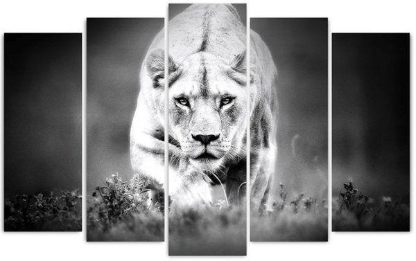 Пятимодуль, черно-белая львица