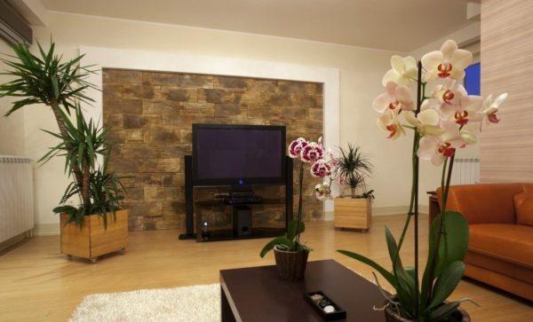 Гостиная классического стиля украшенная крупной пальмой в горшке