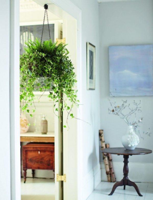 Цветок на цепи в дверном проёме